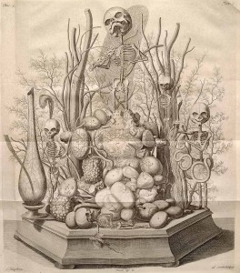 anatom